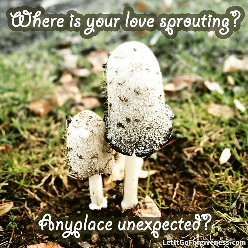 where is your love sprouting quote